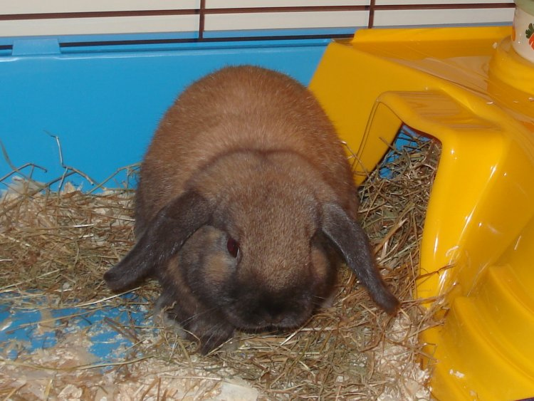 5 Must Know Symptoms That Your Rabbit is Depressed