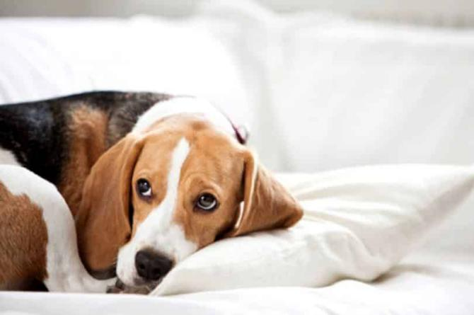 15 Effective Methods to Treat Depression in Dog – Trusted