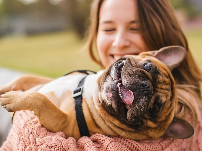 12 Ways to Understand Your Dog's Wishes – Must Learn!