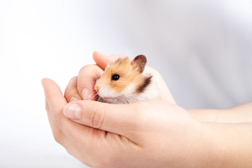 10 Ways To Hold Your Hamster Correctly