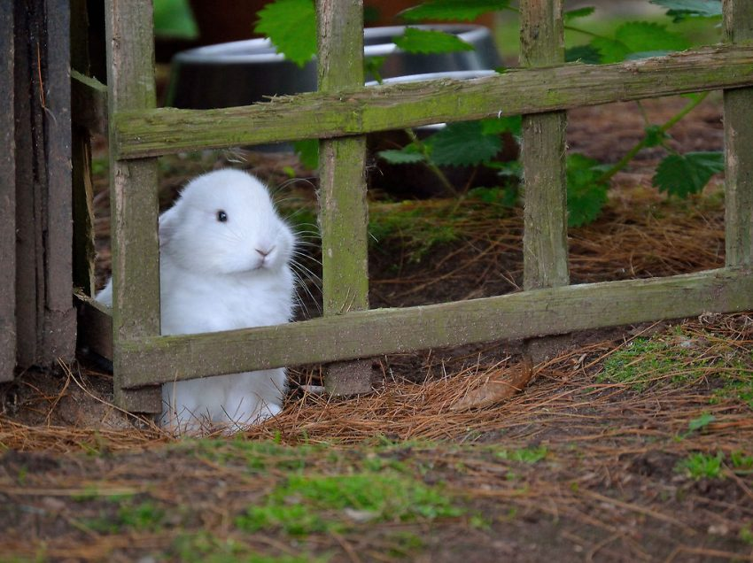 Don't Let Your Rabbit Feel Lonely, Here are 5 Signs
