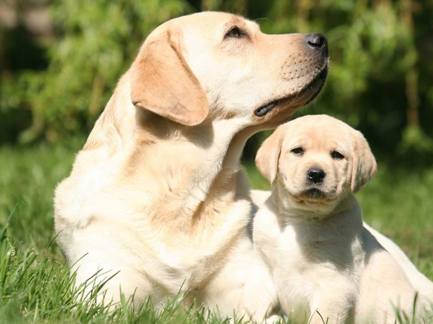 Benefits of Getting A Puppy With An Older Dog