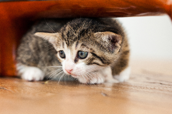 How to Tame A Kitten That is Scared of Humans