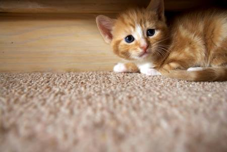 6 Effective Ways to Make A Kitten Trust You Fast