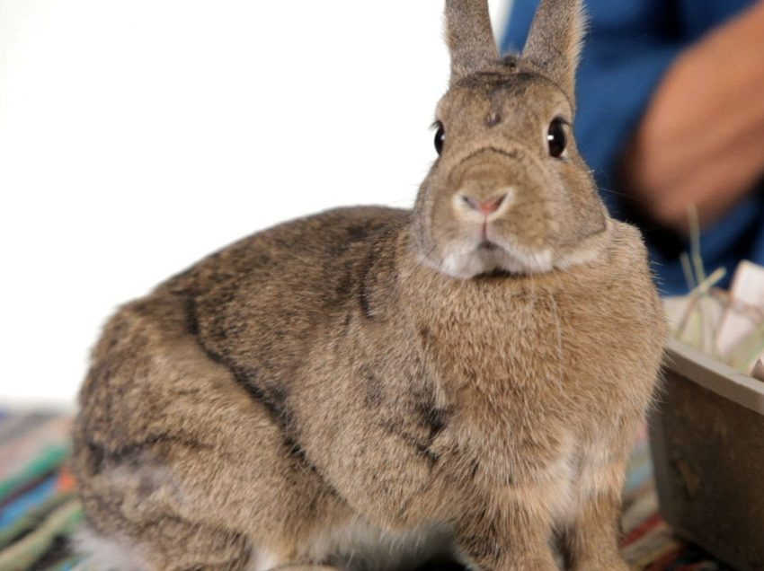 How To Take Care A Stray Adult Rabbit At Home