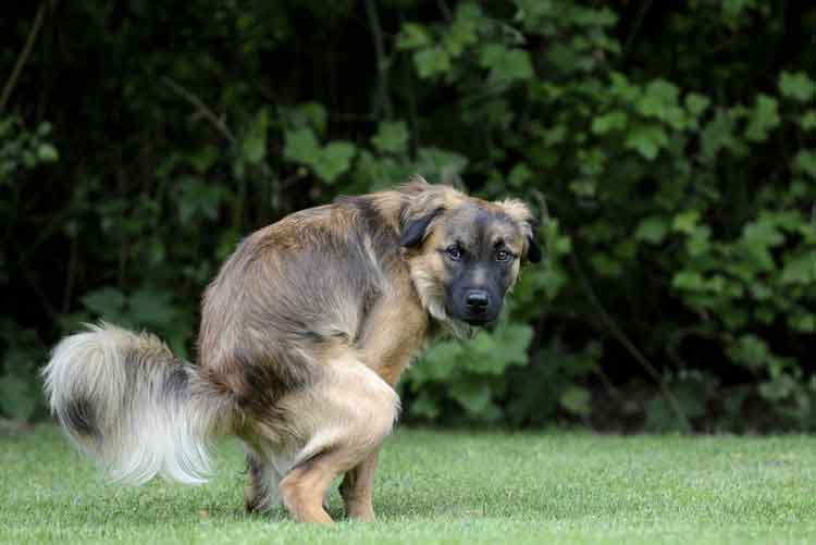 7 Ways to Train Your Dog to Pee and Poop On The Right Spot