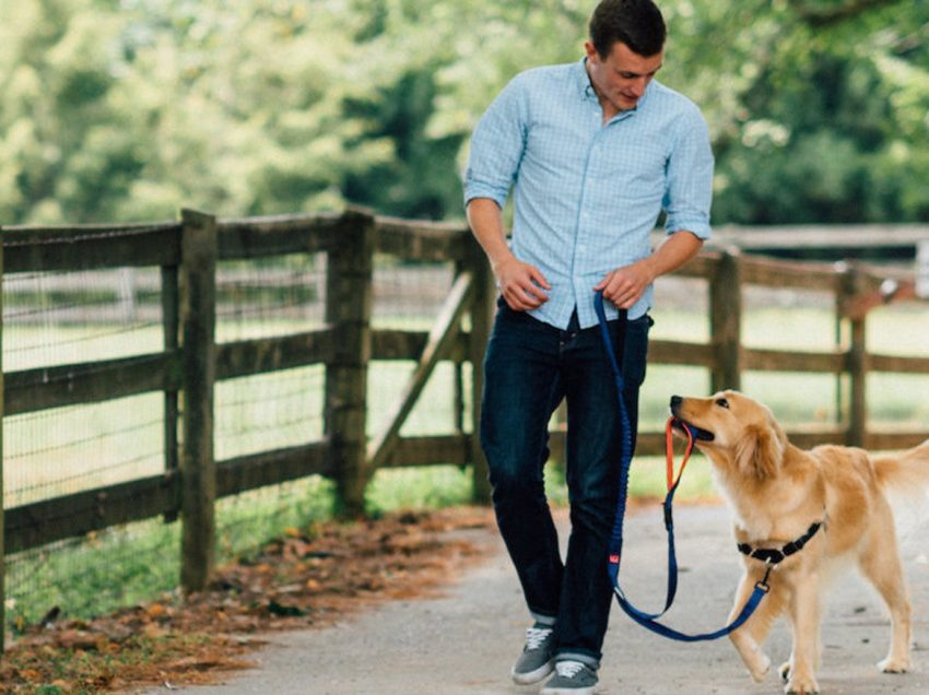 7 Ways To Understand Your Dog's Wishes