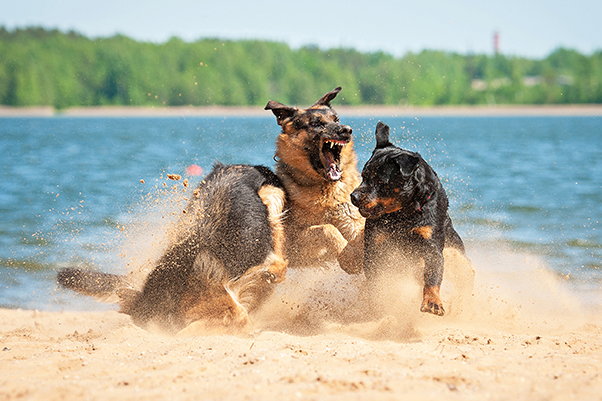 Easy Tips For Handling Previously Aggressive Abused Dogs