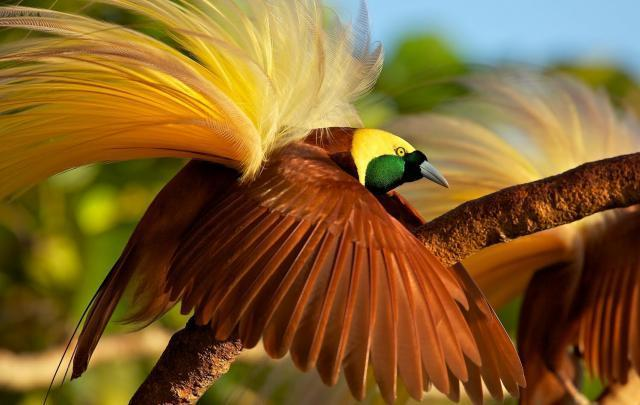 Let's Get Closer with Bird of Paradise