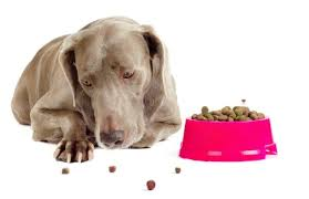 9 Warning Signs Your Dog Has Food Allergies