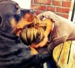 8 Ways To Know That Your Pet Dog Know Your Sadness – Research Support
