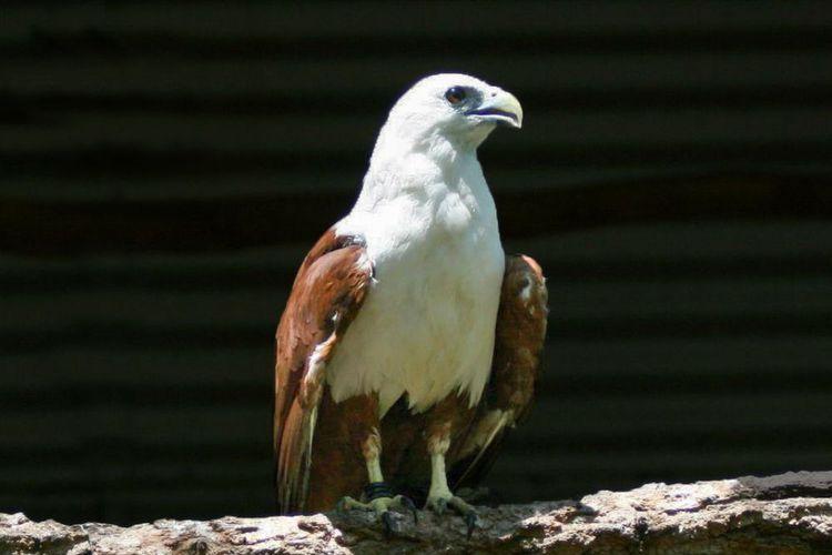 Let's Get Closer with Bondol Eagle