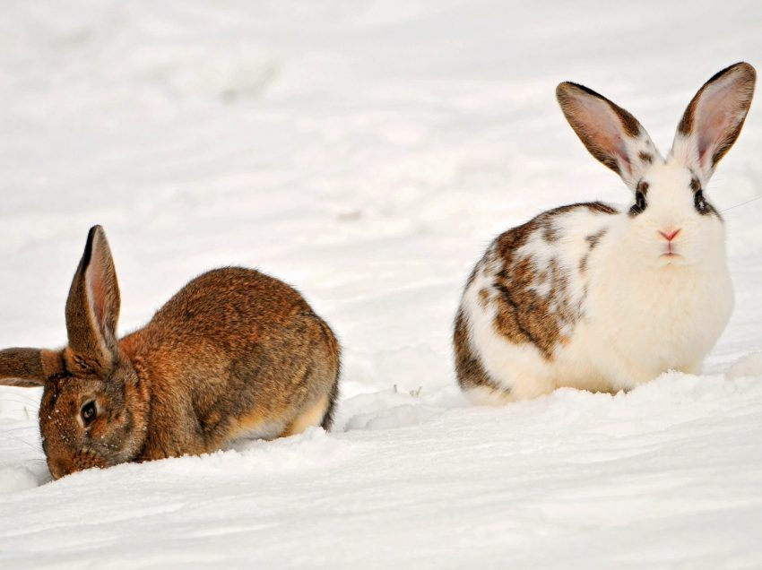 9 Guide on How to Keep a Rabbit Warm During Winter Time