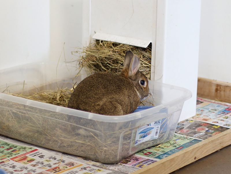 How To Do Litter Training For Your Rabbit?