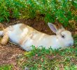 10 Guide on How To Keep Rabbits Cool During Summer Time