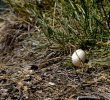 2 Easy Ways to Care for Abandoned Duck Egg