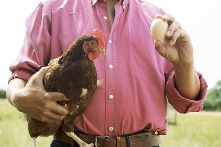 10 Ways To Stop Your Chickens From Eating Their Eggs