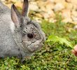 10 Easy Ways To Tame A Fearful Rabbit