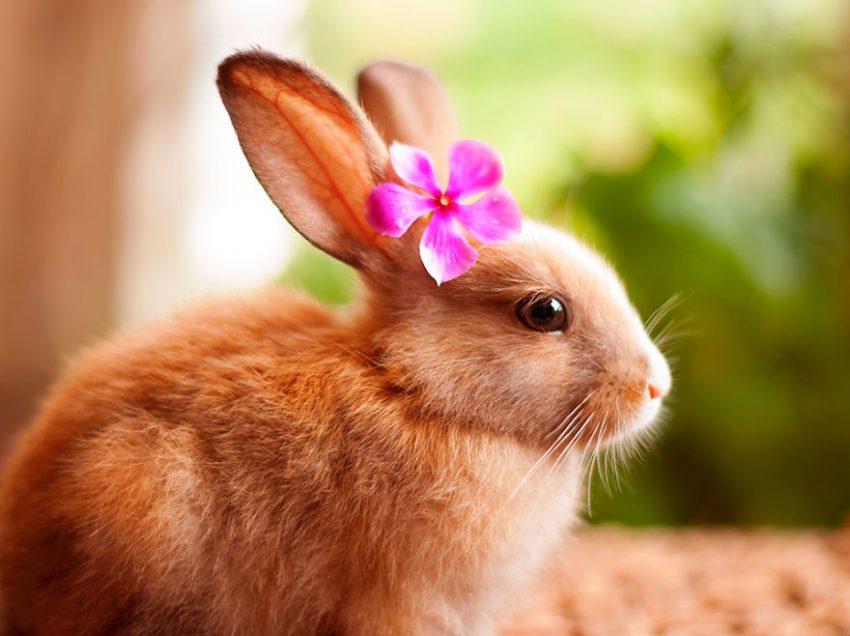 10 Common Behavior Of Female Rabbit