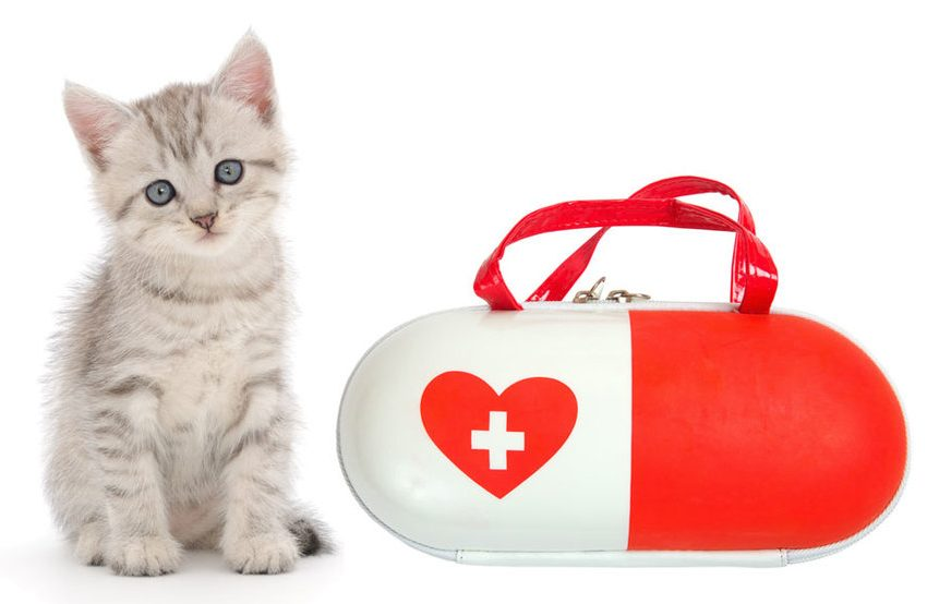First Aid Items You should Prepare for Kittens
