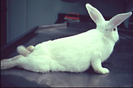 10 Ways To Treat Sudden Paralysis In Rabbits
