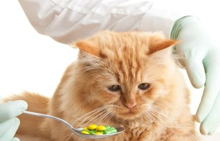 3 Best Natural Supplements for Your Lovely Cat