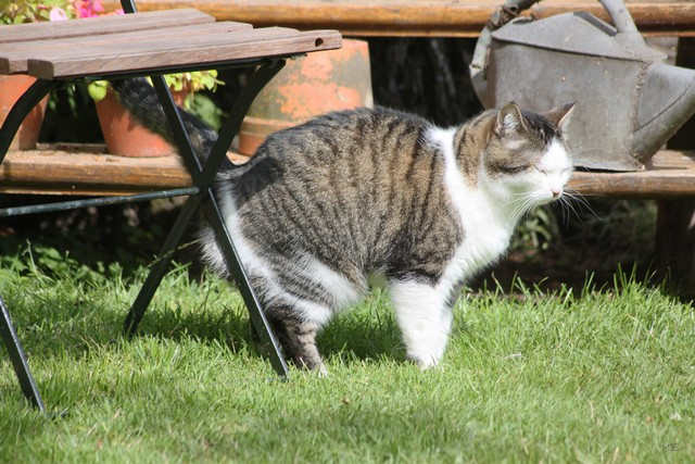 How to Stop Your Cat Marking Territory at Your House