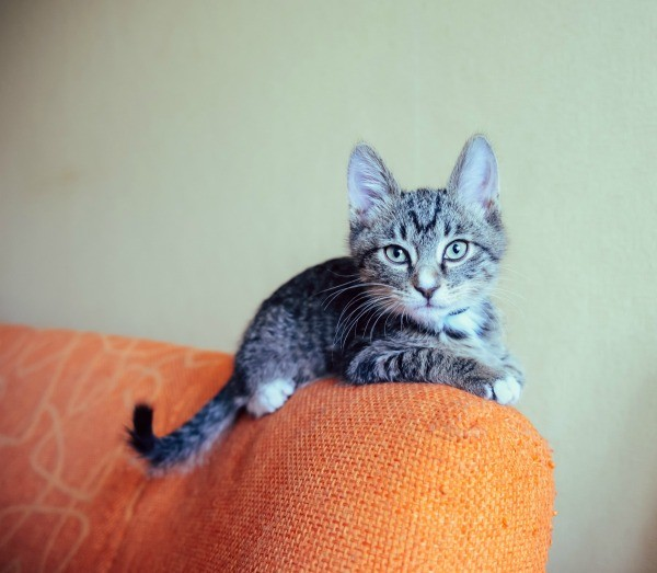 How to Train Your Cat Not to Pee on Furniture