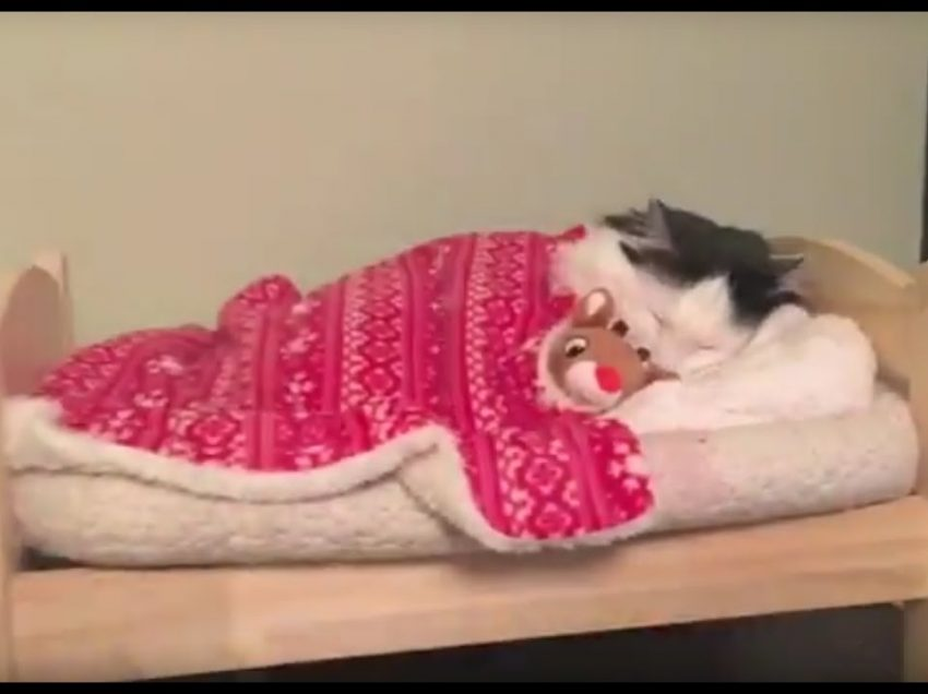 3 Ways to Train Your Cat to Sleep in Her Own Bed