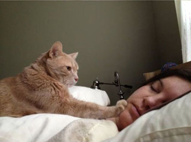 How to Stop Your Cat from Waking You Up at Night