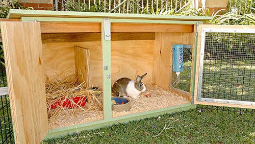 4 Ways of How To Keep Rabbit Cage From Stinking