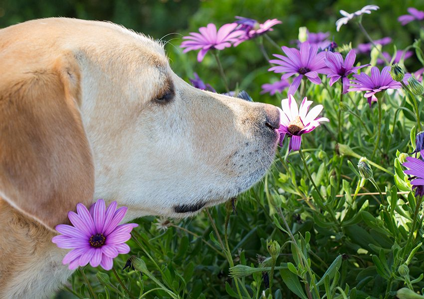 8 Natural Ways To Make Your Dog Smells Good All Day