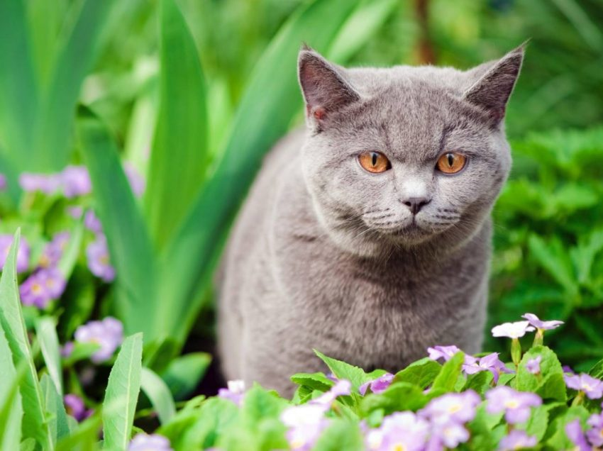 12 Ways To Keep Stray Cats Out Of Your Beloved Garden