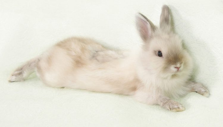 8 Ways To Stop Rabbit From Smelling