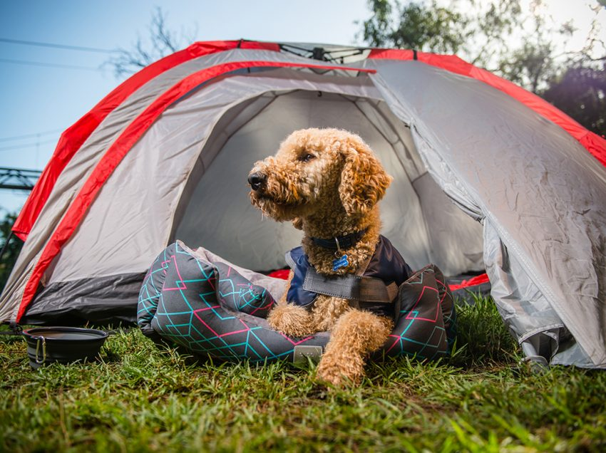 What You Need To Prepare For Your Dog's First Camping Trip