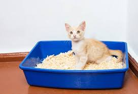 5 Easy Ways To Stop Cats From Lying In The Litter Box