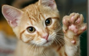 cats-paw-disorders