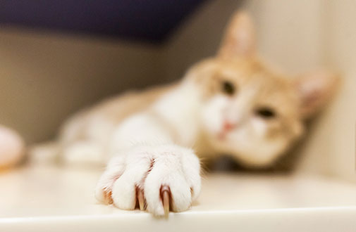4 Warning Signs of Claw Disorder in Cat