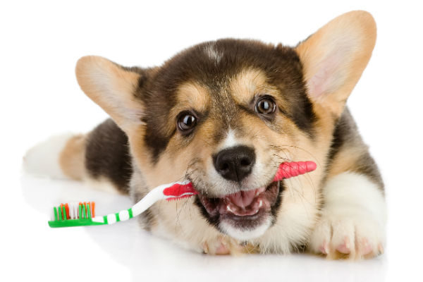 How To Properly Clean Your Dog's Teeth