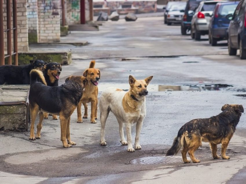 Best Effective Ways To Tame A Feral Stray Dog