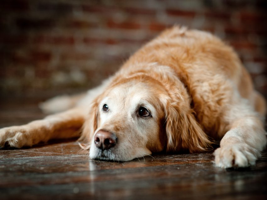 What to expect with an older dog?