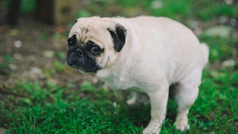 Best Natural Treatments for Puppies Constipation