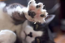 3 Simple Home Remedies to Treat Cat Claw Fungus