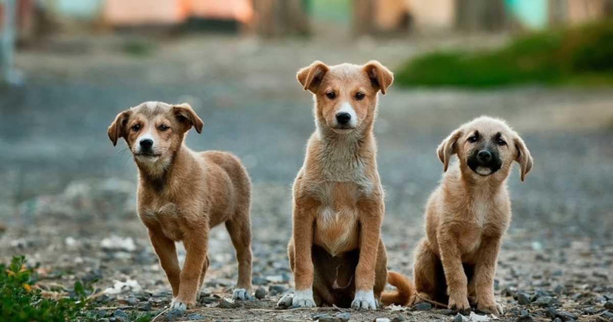 adopt-a-stray-dog