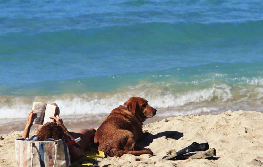 How To Avoid Beach Hazards On Your Dog