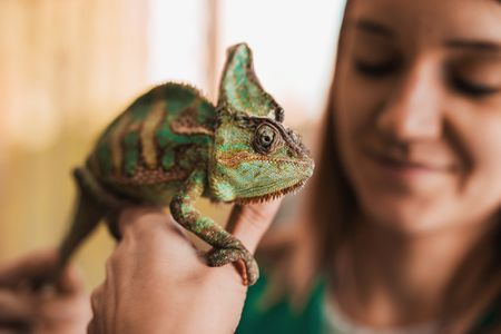 5 Pros of Keeping A Chameleon As Pet