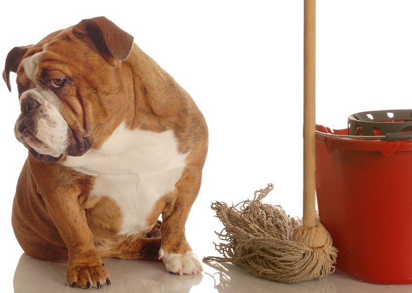 How To Help Inability To Urinate In Your Dogs