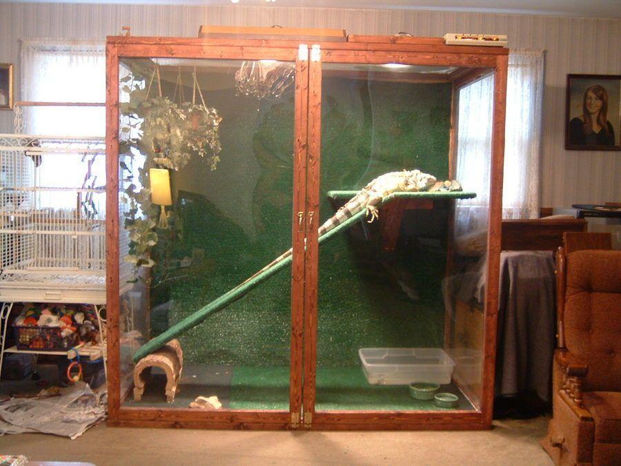 iguana-cage