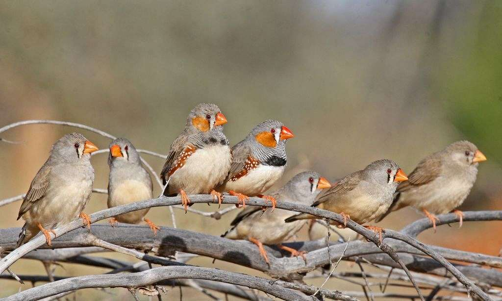 multiple-finches