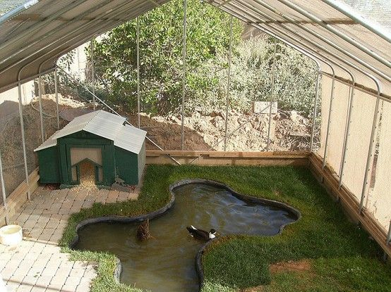 Important Things You Should Know When Building Duck Coop